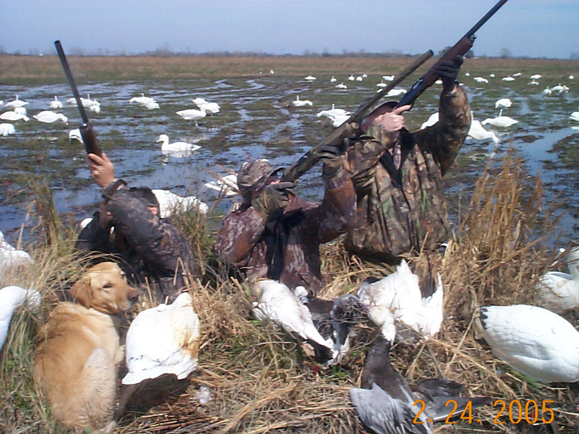 Southwest Louisiana Pheasant Hunt With Your Bird Dog Or Ours