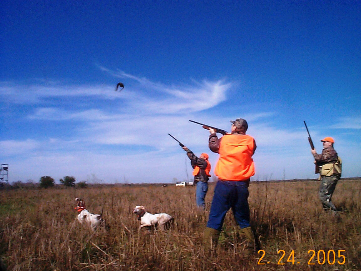 Southwest louisiana pheasant hunt with your bird dog or ours for Illinois fishing license cost